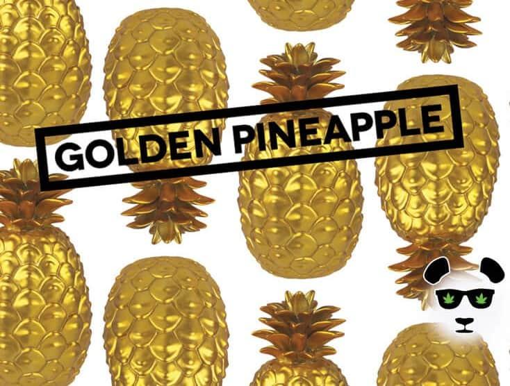 phat panda golden pineapple